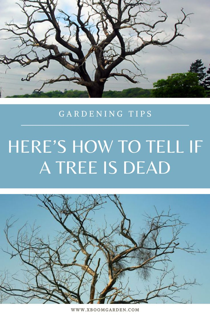 Here S How To Tell If A Tree Is Dead In 2020 Gardening Tips How To Find Out To Tell