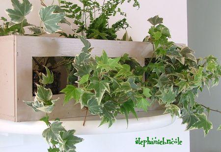 tutoriel du cadre végétal