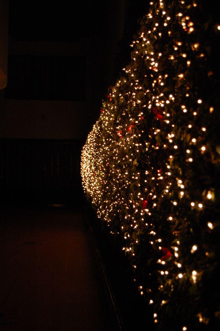 Luces like luciernagas | Luciérnagas en. El Jardín | Pinterest