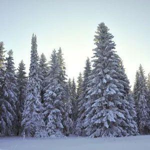 ZIMA stravování (Jíme jinak) - v zimě je důležité odpočívat