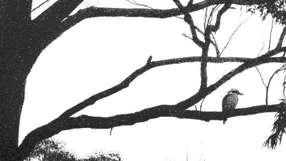 Textured Black and White Kookaburra in Tree by BlackbirdArtDesign on Etsy $35.00 Stretched Canvas 30 x 42cm