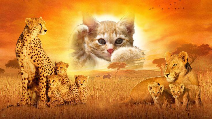 Kitten and wild cats