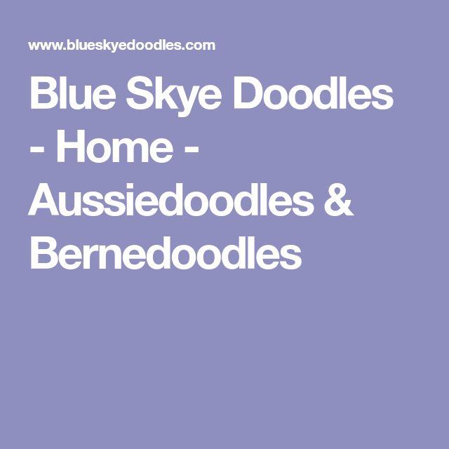 Blue Skye Doodles - Home - Aussiedoodles & Bernedoodles