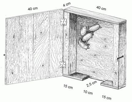 costruire batbox e bat board