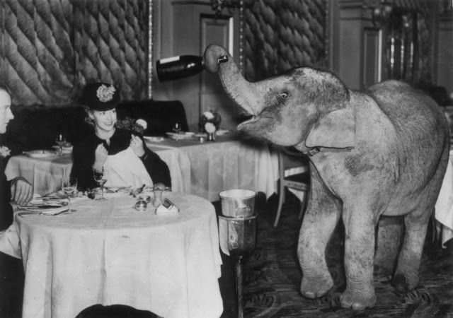 Comet, an elephant from Chessington Zoo spends the weekend as a waiter at the Trocadero Restaurant in Piccadilly Circus, London, December 19...