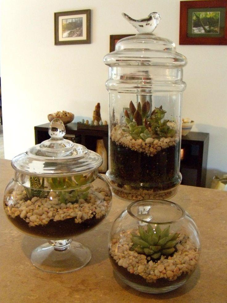 Succulents in vintage apothecary jars by Sadie Seasongoods / www.sadieseasongoods.com