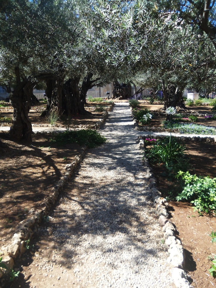 1000 Images About Israel On Pinterest Old City Holy Land And The Church