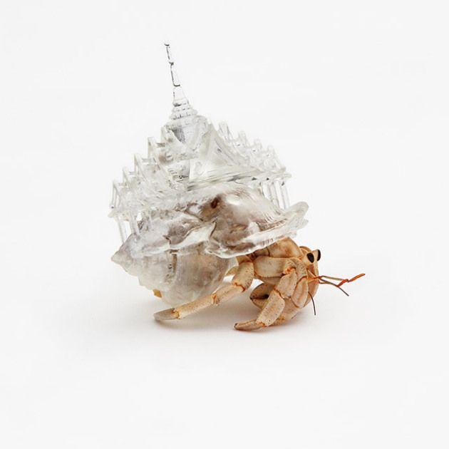 Inspirada pela viagem que fez do Japão à França, Aki Inomata criou conchas um tanto quanto estilosas para caranguejos eremitas.  Os lares foram impressos em 3D e muito bem aceitos pelos seus moradores. :-)
