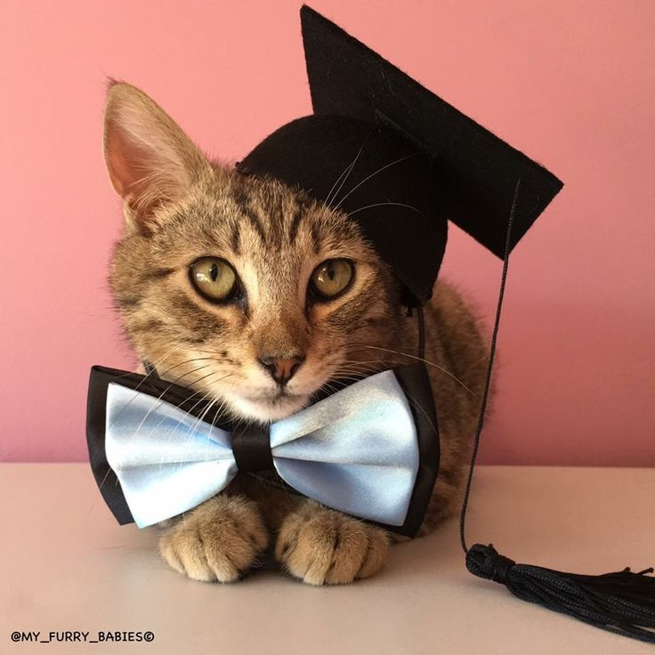 259 best Cat & Kittens wearing clothes images on Pinterest