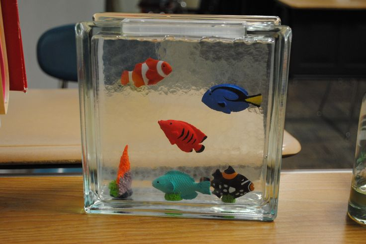 21 best fish images on pinterest aquarium under the sea for Small glass fish tank