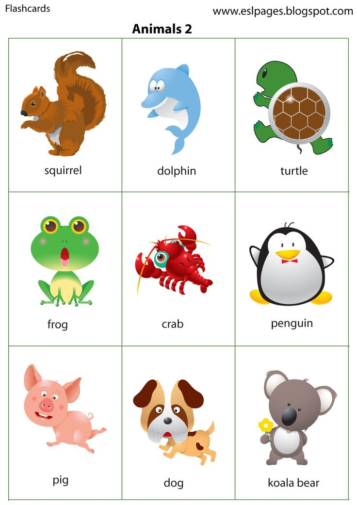 Esl Pages: Animals
