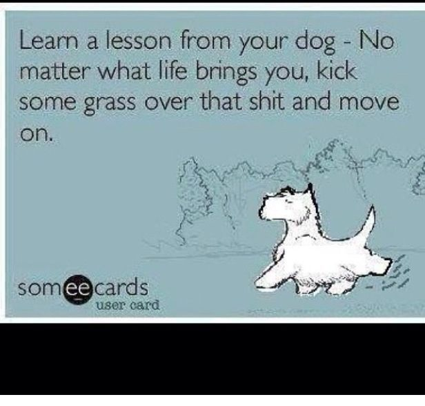 Dog Humor: Learn a lesson from your dog. No matter what life brings you, kick some grass over that shit and move on. #dogquoteslove