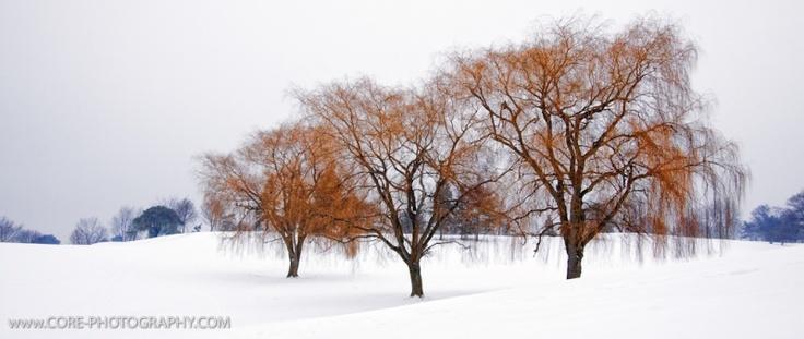 Rockway Golf course in winter
