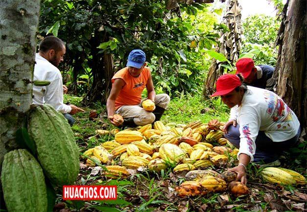 Después de la minería, el sector agropecuario es el que más aporta a la economía, siendo China el principal  país de destino de las agroexportaciones peruanas.                 .