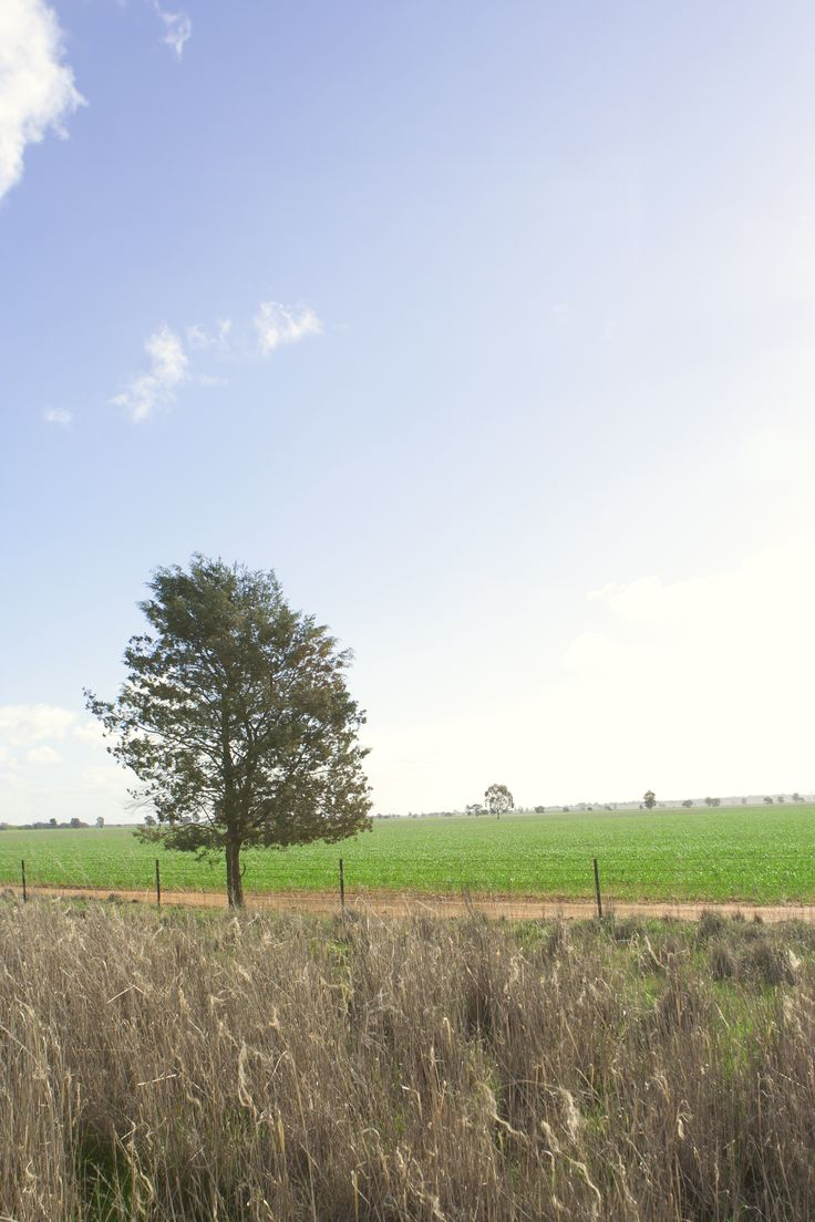 Out and about in the Riverina.