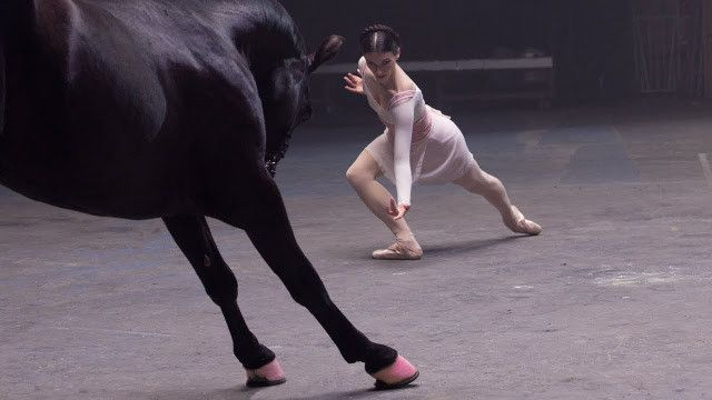 The Best Ad Ever, Watch The Black Horse, You Will Love It (Video)