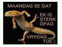 Afrikaans. HC