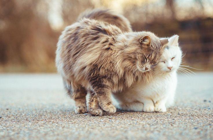 Photo #400 / Feral Cat Photo #53