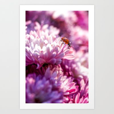 Ladybug in pink Art Print by Digital Dreams - $14.99