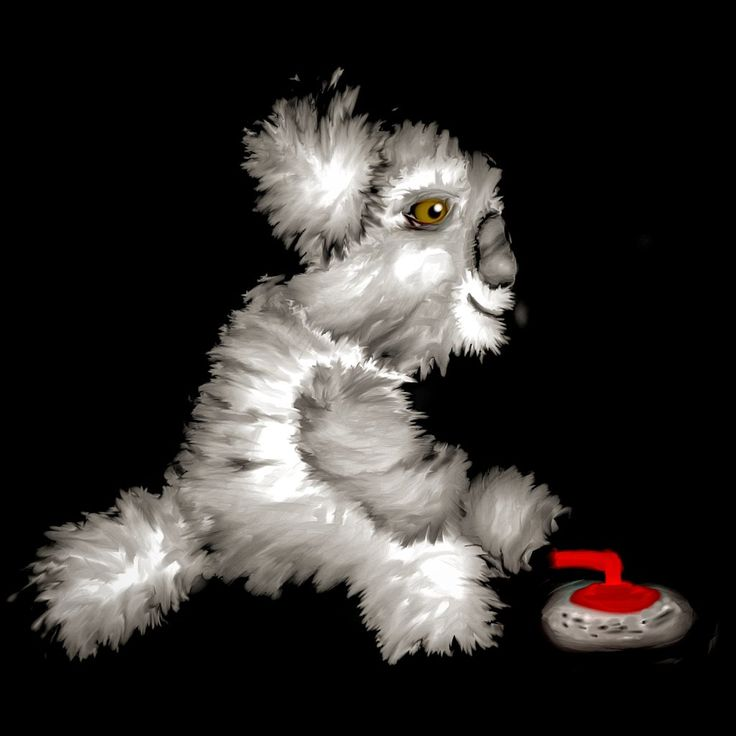 Koala curling