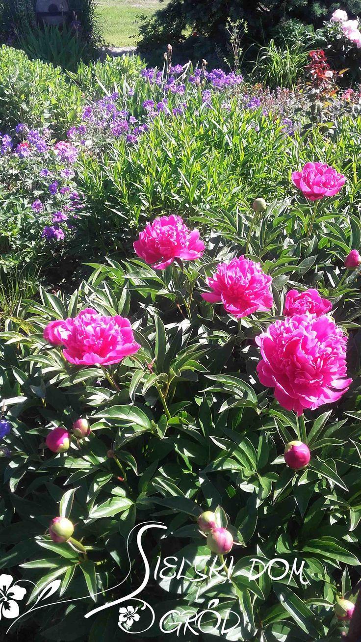 Wiosna w sielskim ogrodzie. Cottage garden