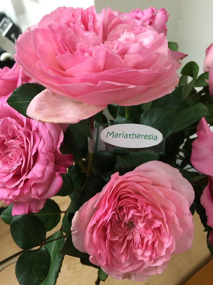 Roses In Garden: 17 Best Images About Garden Roses On Pinterest