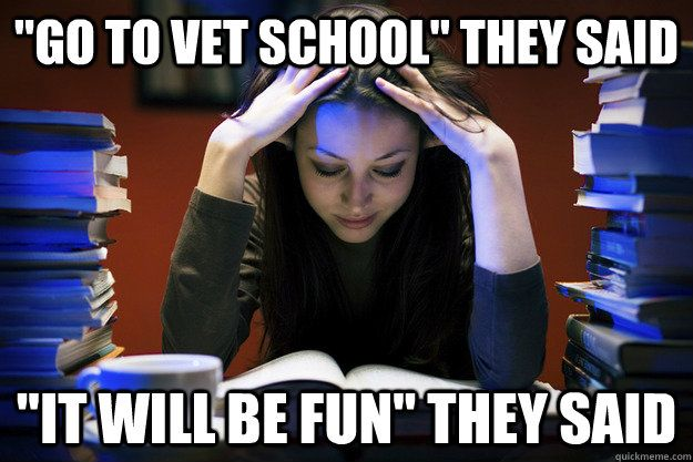 """Fun Funny Meme: """"Go To Vet School"""" They Said """"it Will Be Fun"""" They Said"""