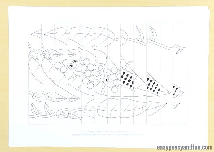 Ladybug Life Cycle Agamograph Template Insect Crafts Ladybug
