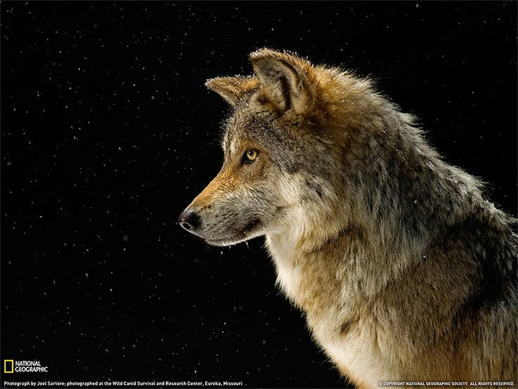 Animali d'inverno  nelle grandi foto della settimana