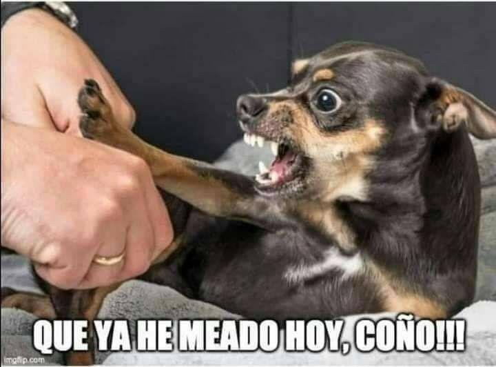 20 Divertidos Memes De Perros Que Te Haran Llorar De Risa Memes De Animales Divertidos Memes De Perros Chistosos Memes Perros