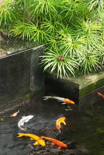 Las 25 mejores ideas sobre mini estanque en pinterest y for Como hacer un estanque para peces koi