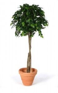 Artificial Ficus Topping Tree