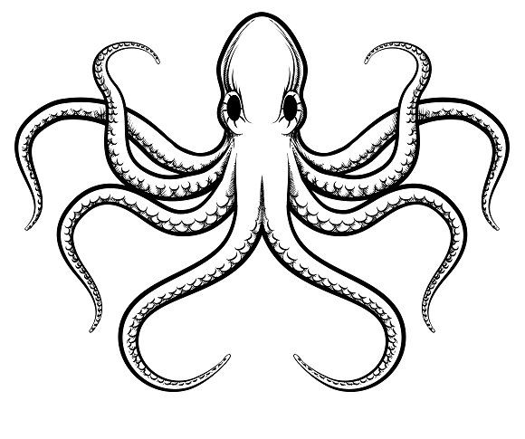 Vector octopus illustration by Microvector on @creativemarket