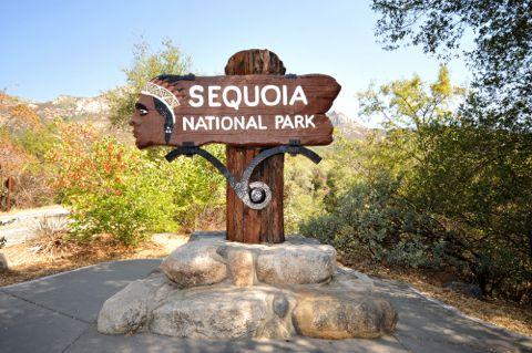 Parco nazionale Americano di sequoie, California -Le sequoie della California del Nord più antichi esseri viventi sulla Terra e l'attrazione principale di questo parco nazionale. Cosa c'è di più singolare di questa attrazione è che si può sperimentare 2 meraviglie naturali in un unico luogo - la foresta e l'oceano. Cerca con Google