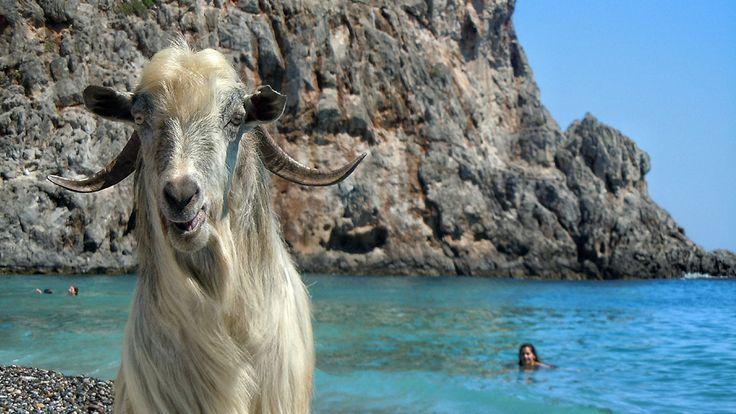 Travel ideas and valuable travel tips, cretan tradition, modern life, cretan culture. In short: Crete as we live it!  CRETAZINE.COM