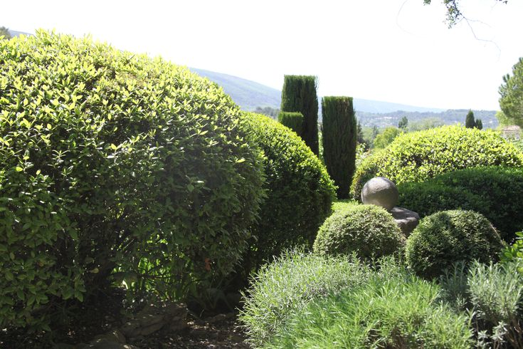 25 best ideas about buxus sempervirens on pinterest buxus french garden ideas and boxwood plant. Black Bedroom Furniture Sets. Home Design Ideas