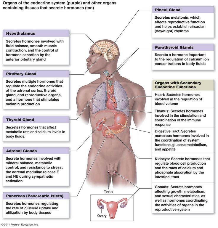 49 Best Endocrine System Images On Pinterest Endocrine System