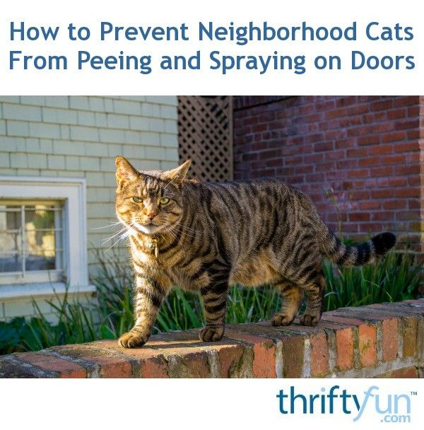 How To Get My Female Cat To Stop Peeing Everywhere
