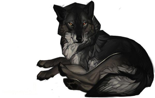 Scott the male wolf.