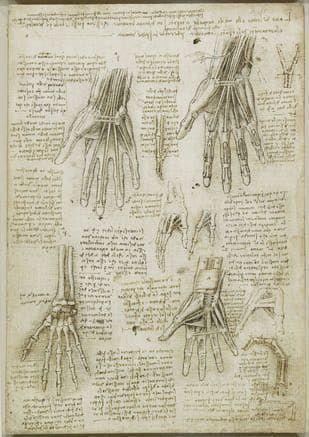 Estudio de los huesos, músculos y tendones de la mano la colección de dibujos de anatomía del cuerpo humano de Leonardo da Vinci.
