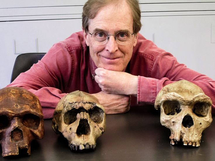 Alan Rogers, an anthropologist and population geneticist at the University of Utah, analyzed the migrations and evolutionary relationships of modern and archaic humans. The new model that he and his colleagues developed resolved some of the paradoxes surrounding the history of the Neanderthals.