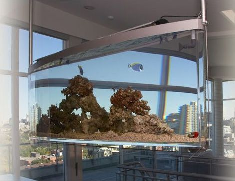 Home decor that is truly alive the contemporary for Spacearium aquariums