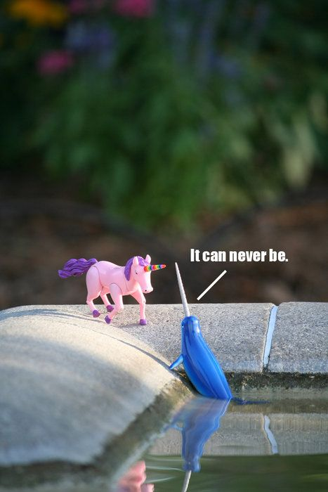 :(: Giggle, Funny, Forbidden Love, Narwhals, Humor, Unicorns