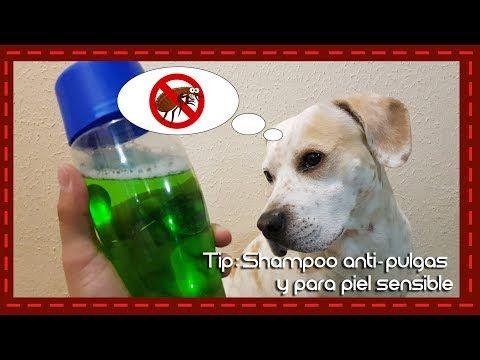Tip: Shampoo casero para perros antipuglas y piel sensible - YouTube
