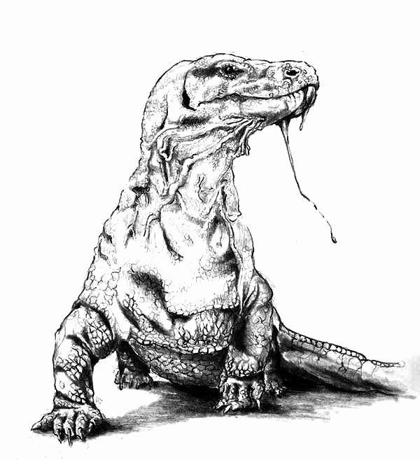 Komodo Dragon Coloring Page New Download Line Coloring Pages For