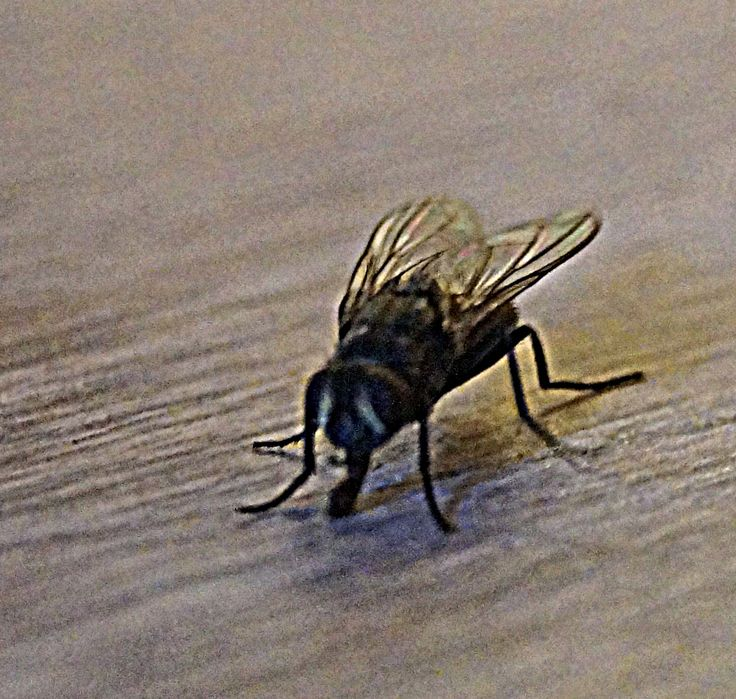 Fliege Foto: Stephanie Limberg