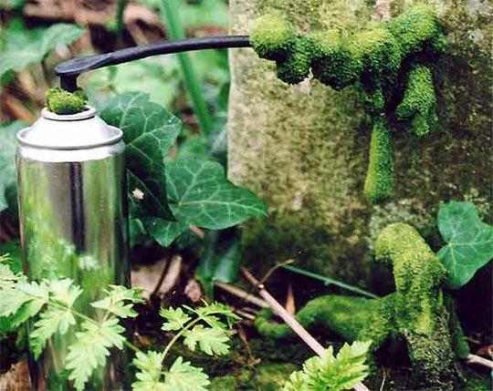 "Moss graffiti. Create a ""moss paint"" and watch it grow."