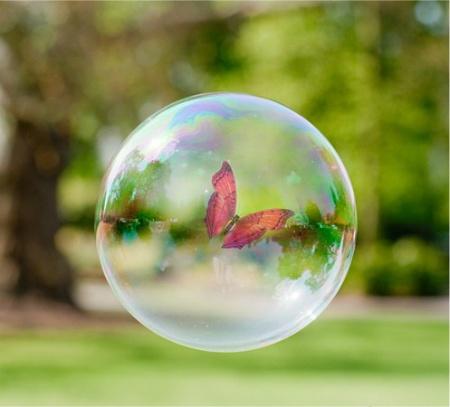 buttterfly in a bubble.