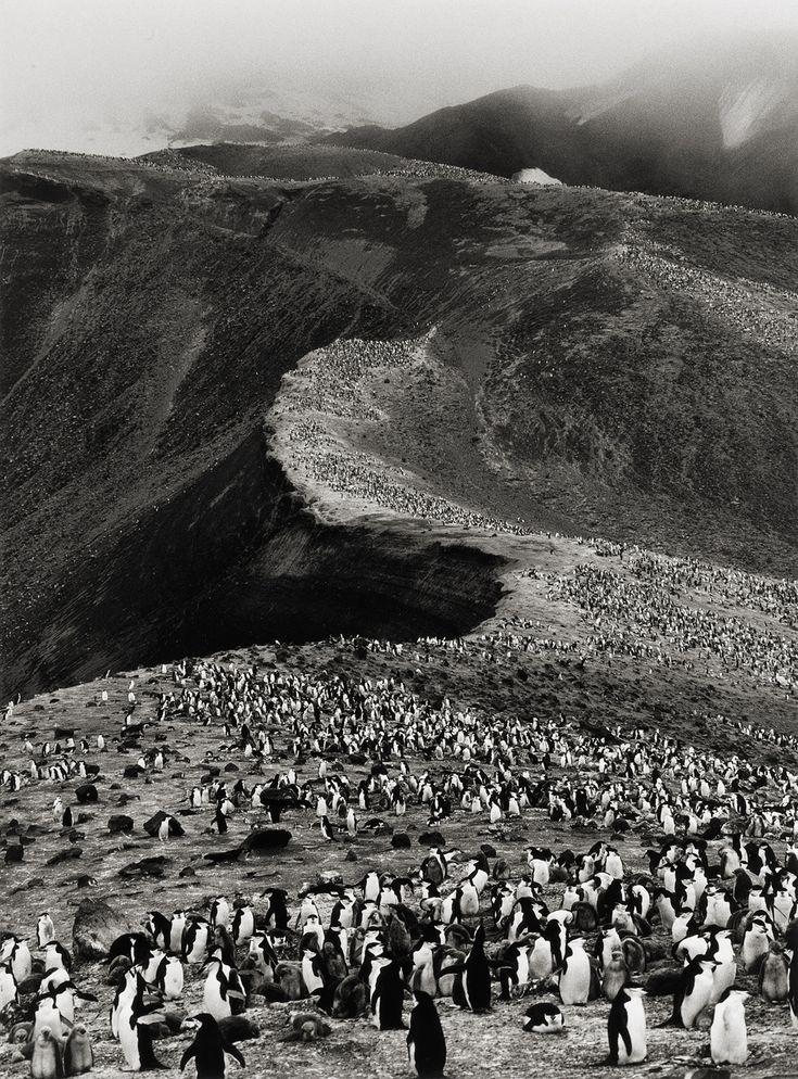 Chinstrap Penguins, Bailey Head, Deception Island  photo by Sebastião Salgado; Genesis series, 2005