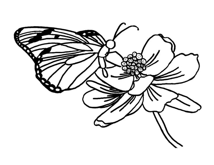 FREE Butterfly Coloring Pages Visiting Flower